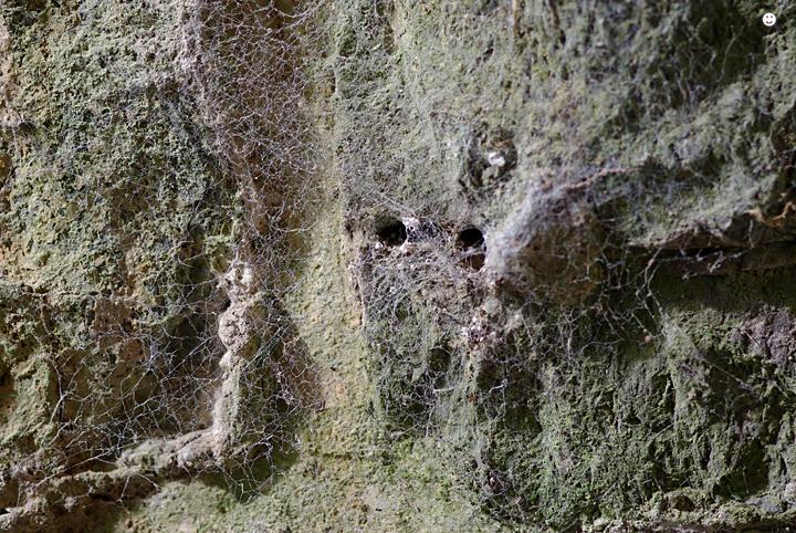 Fliegende Spinnweben